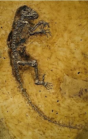 fosils